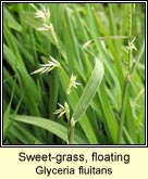 sweet-grass,floating