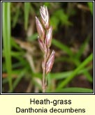 heath-grass