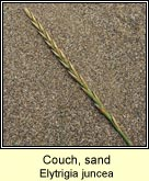 couch,sand