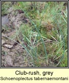 club-rush,grey