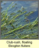 club-rush,floating