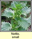 nettle,small (neant�g bheag)