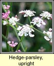 parsley,upright hedge (fionnas f�il)