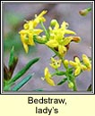 bedstraw,ladys (boladh cnis)