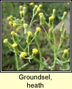 groundsel,heath (gr�nlas m�na)