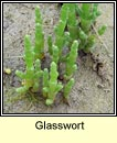 glassworts (lus na gloine)