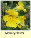 monkey-flower (buí an hogaigh)
