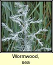 wormwood,sea (liath na tr�)