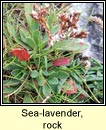 sea-lavender,rock (lus liath aille)