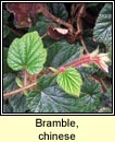 bramble,chinese