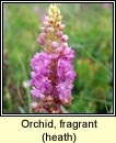 orchid,fragrant,heath (lus taghla)