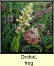orchid,frog (magairl�n an losc�in)