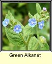 green alkanet (boglas sp�ineach)