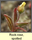 Rock-rose, spotted (Grianr�s breac)