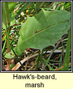 Hawk's-beard, marsh (Lus c�r�in corraigh)