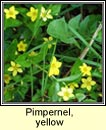 pimpernel,yellow (lus cholm cille)